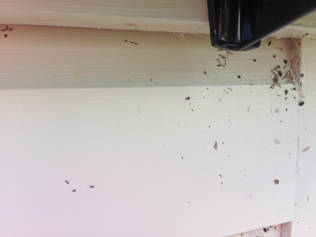 Bugs love the grooves in cladding, its easy to brush them away!