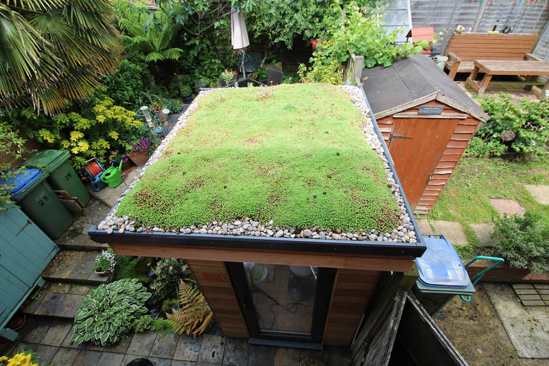 Tiny garden studio with sedum roof